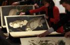 Audubons Birds of America sold for 7.3 Million