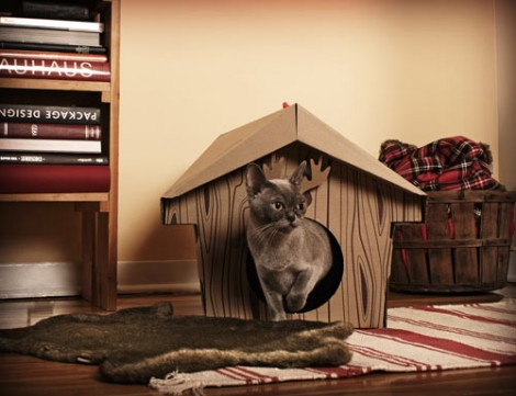 Loyal Luxe for Cats 1