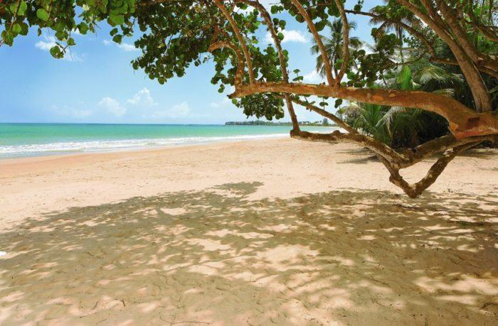 St. Regis Bahia Beach Resort in Puerto Rico 2
