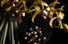 Swarovski Botanical Sculptures by Makoto Azuma 2
