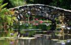 McKee Botanical Garden's Waterlily Garden